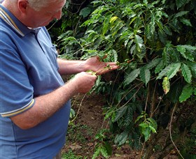Wombah Coffee Plantation - Accommodation Find