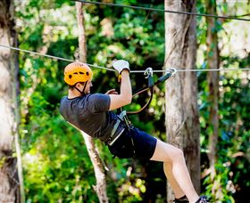 TreeTop Challenge Currumbin - Accommodation Find