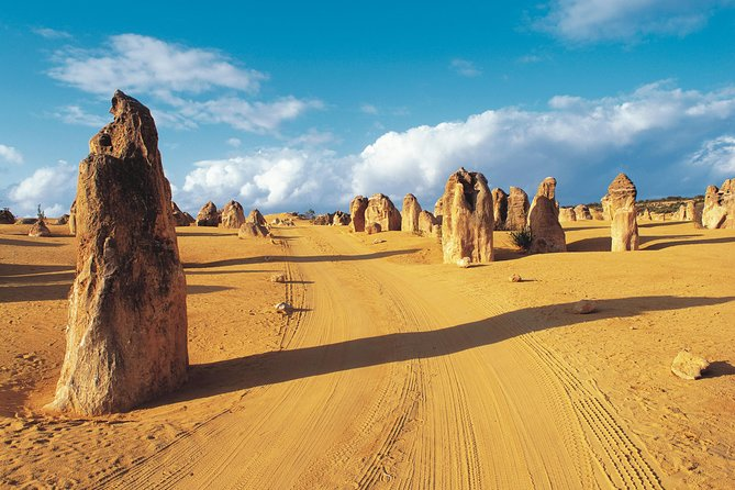 Pinnacles Desert Koalas and Sandboarding 4WD Day Tour from Perth - Accommodation Find