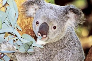 Perth Zoo General Entry Ticket and Sightseeing Cruise - Accommodation Find