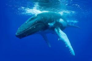 Dunsborough Whale Watching Eco Tour - Accommodation Find