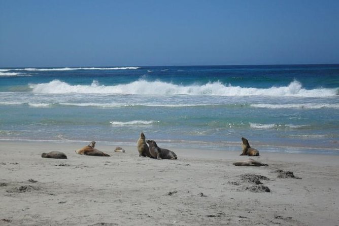 Kangaroo Island in a Day Tour from Adelaide - Accommodation Find