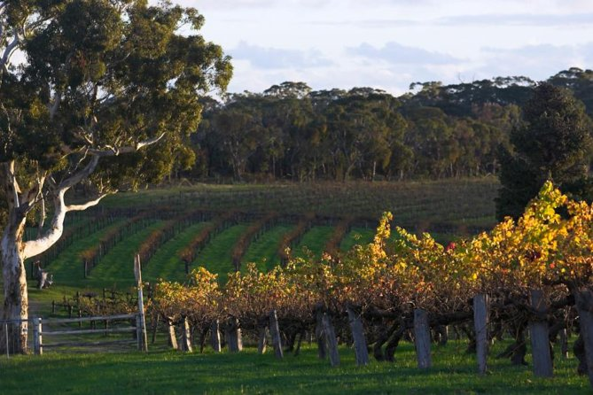 Barossa Valley with Hahndorf Tour from Adelaide - Accommodation Find