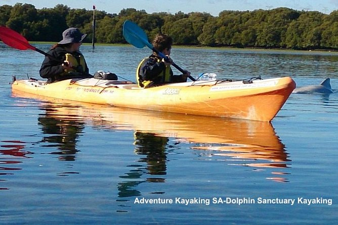 Dolphin Sanctuary and Ships Graveyard Kayak Tour - Accommodation Find