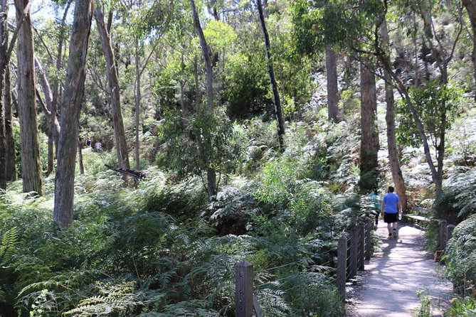Self-Guided Waterfall Gully to Mount Lofty Hike from Adelaide - Accommodation Find