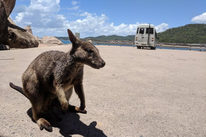 Magnetic Island Tour Maggie Comprehensive - Accommodation Find