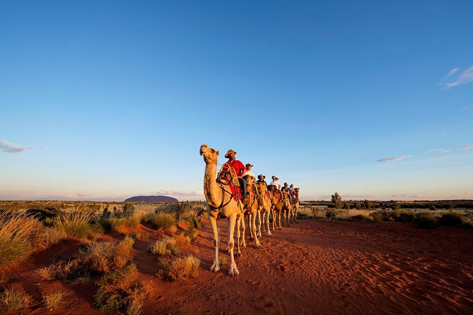Uluru Camel Express Sunrise or Sunset Tours - Accommodation Find