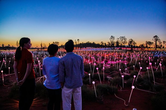 Uluru Field of Light Sunrise Tour - Accommodation Find