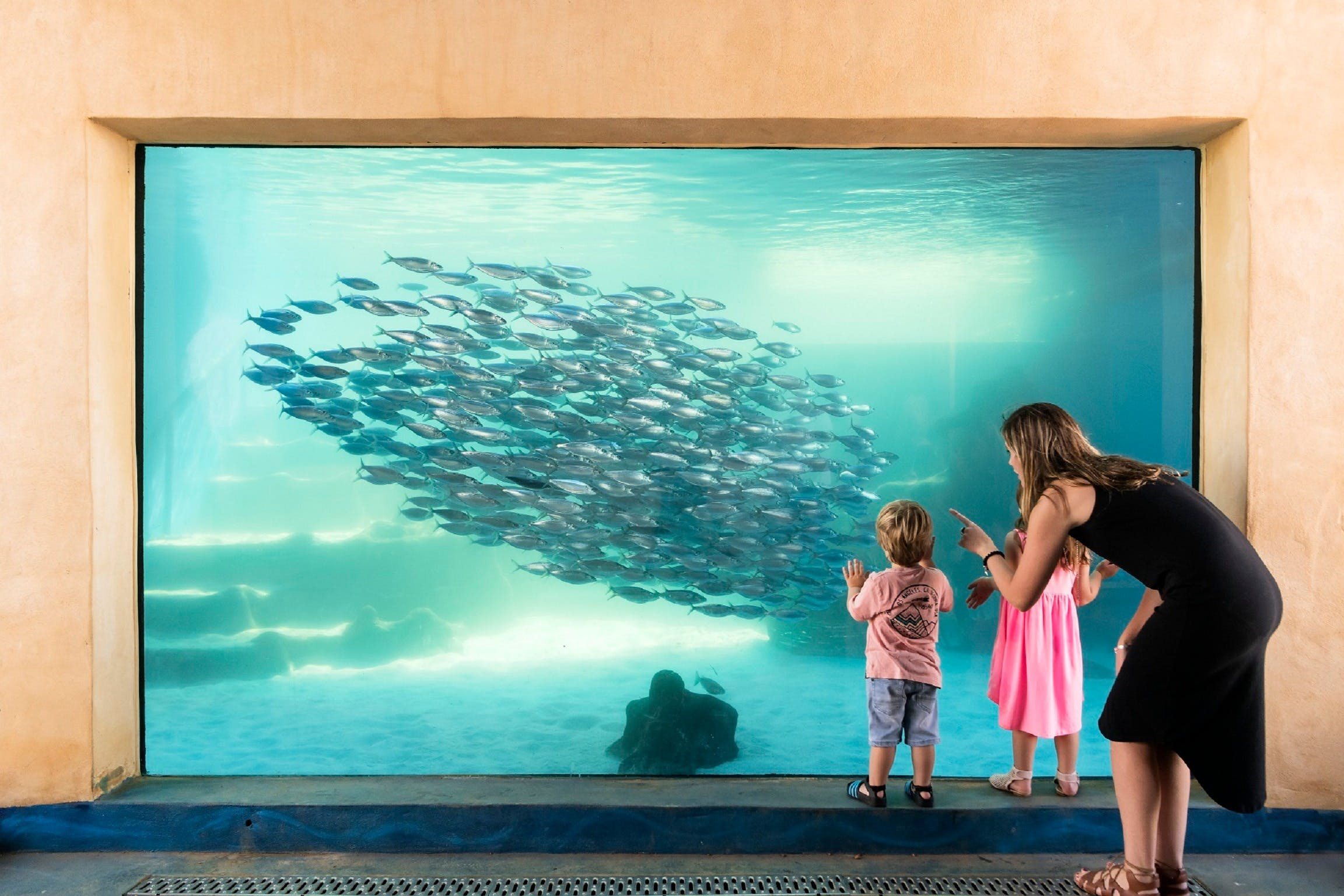 AQWA the Aquarium of Western Australia - Accommodation Find