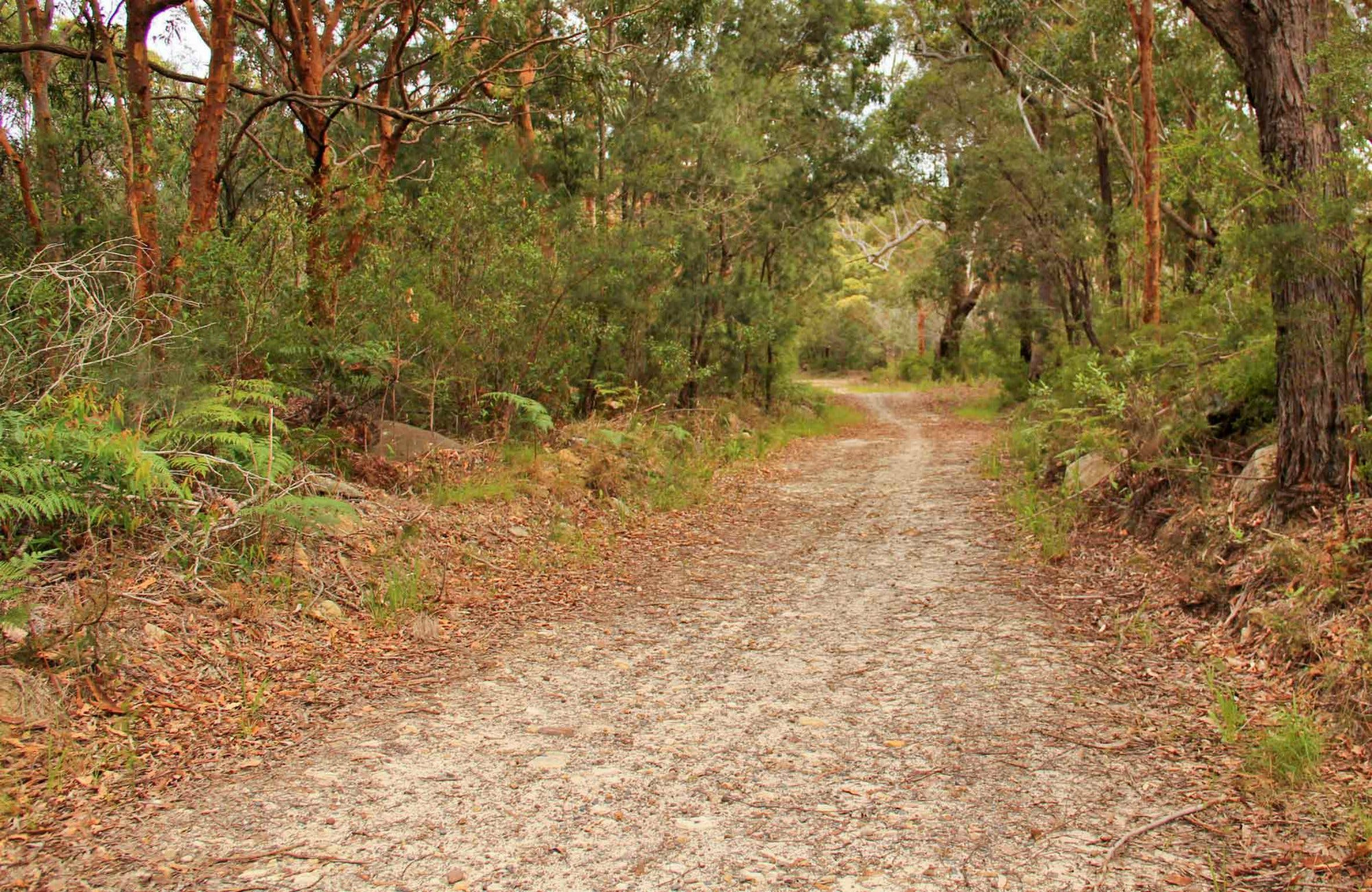 Daleys Point Walking Track - Accommodation Find