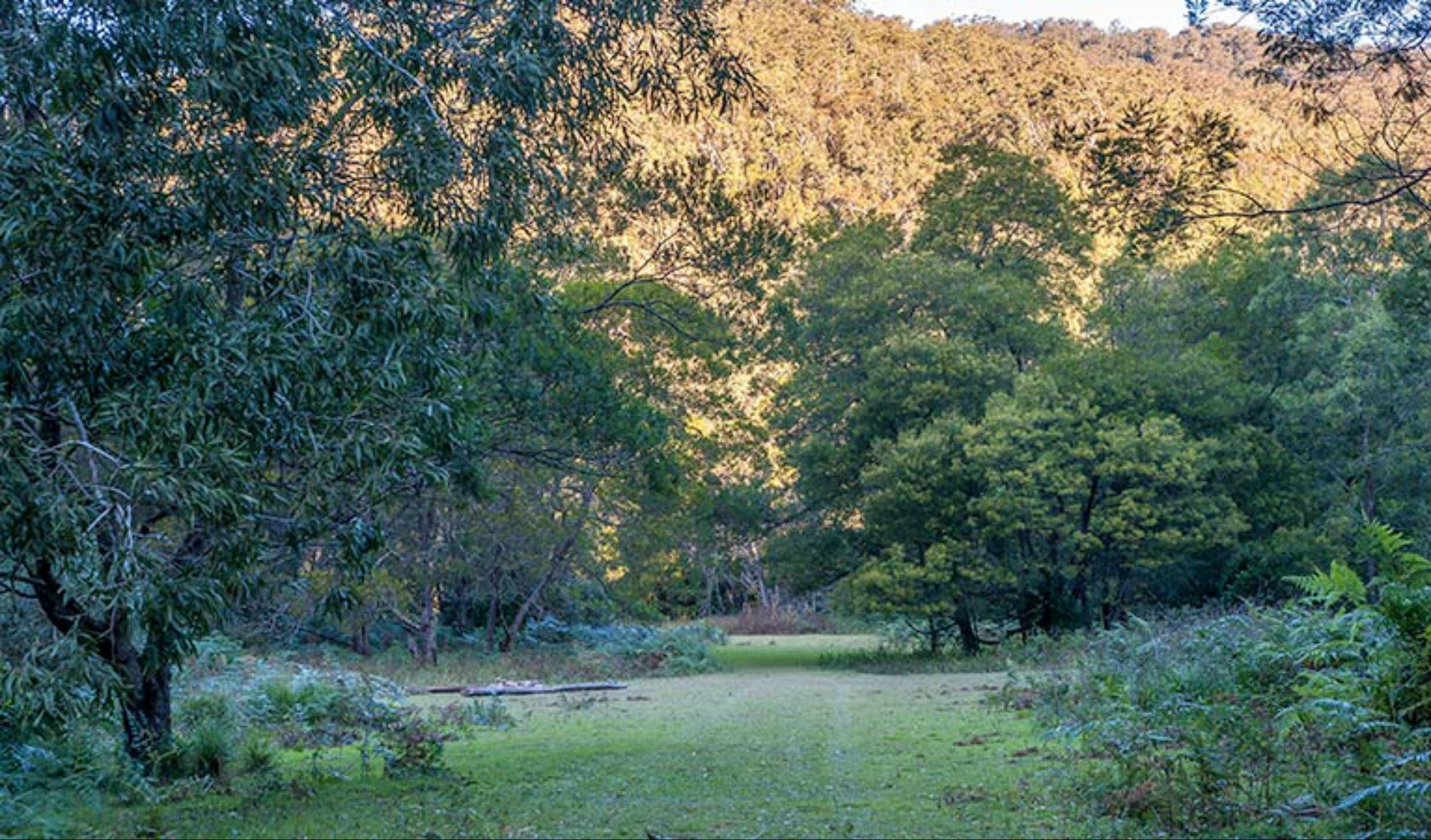 Griffins walking track - Accommodation Find