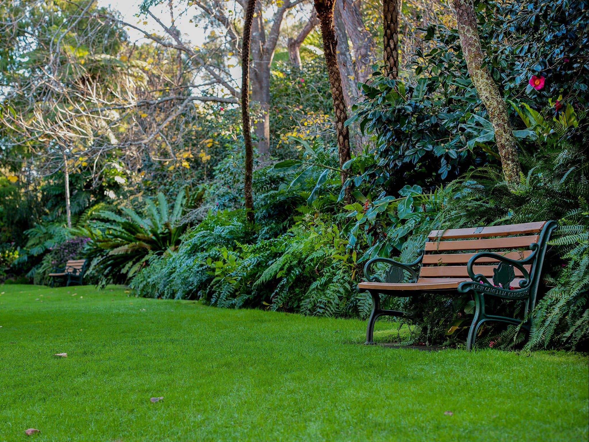 EG Waterhouse National Camellia Gardens - Accommodation Find