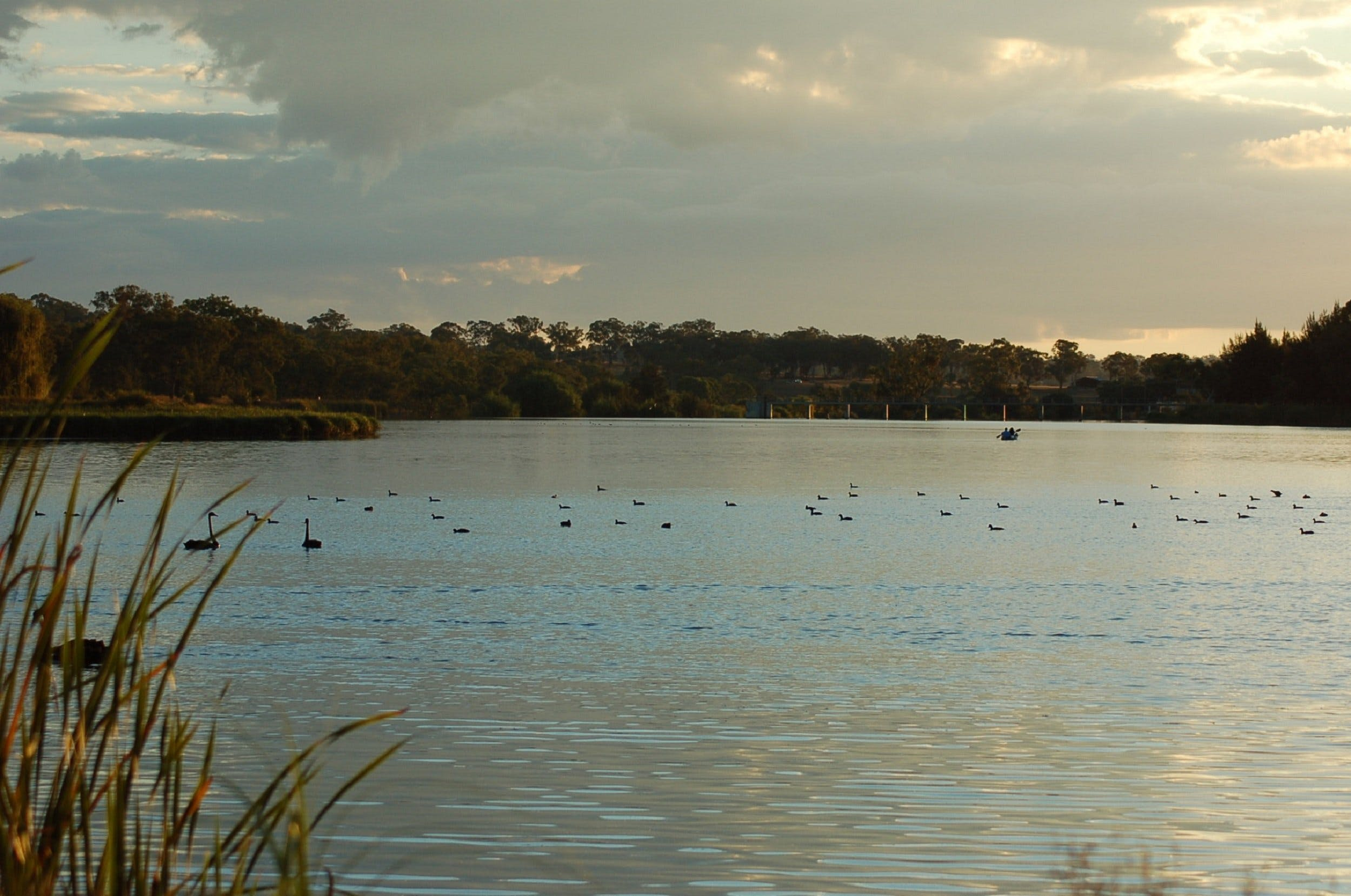 Lake Inverell Reserve - Accommodation Find