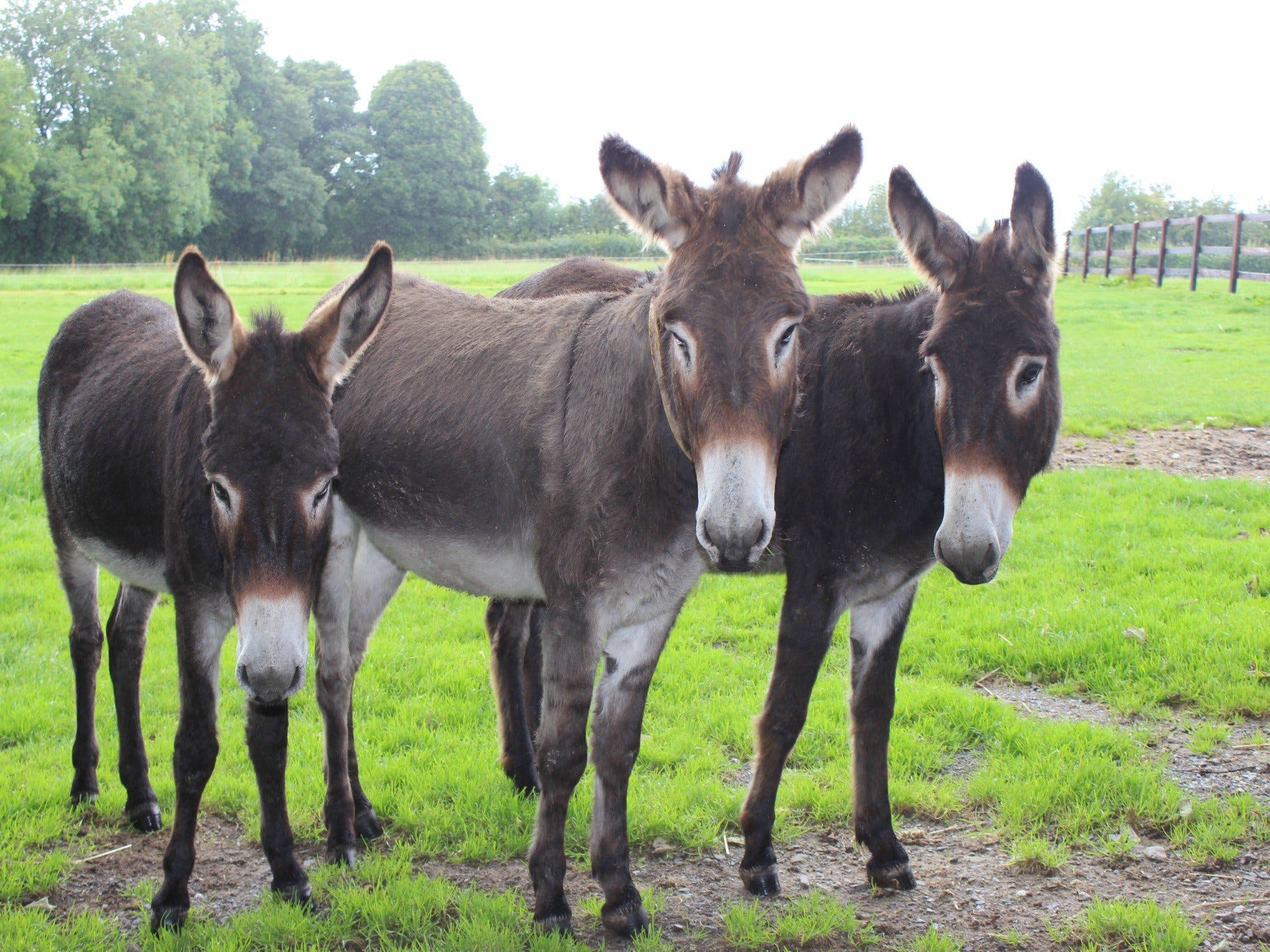 The Good Samaritan Donkey Sanctuary - Accommodation Find