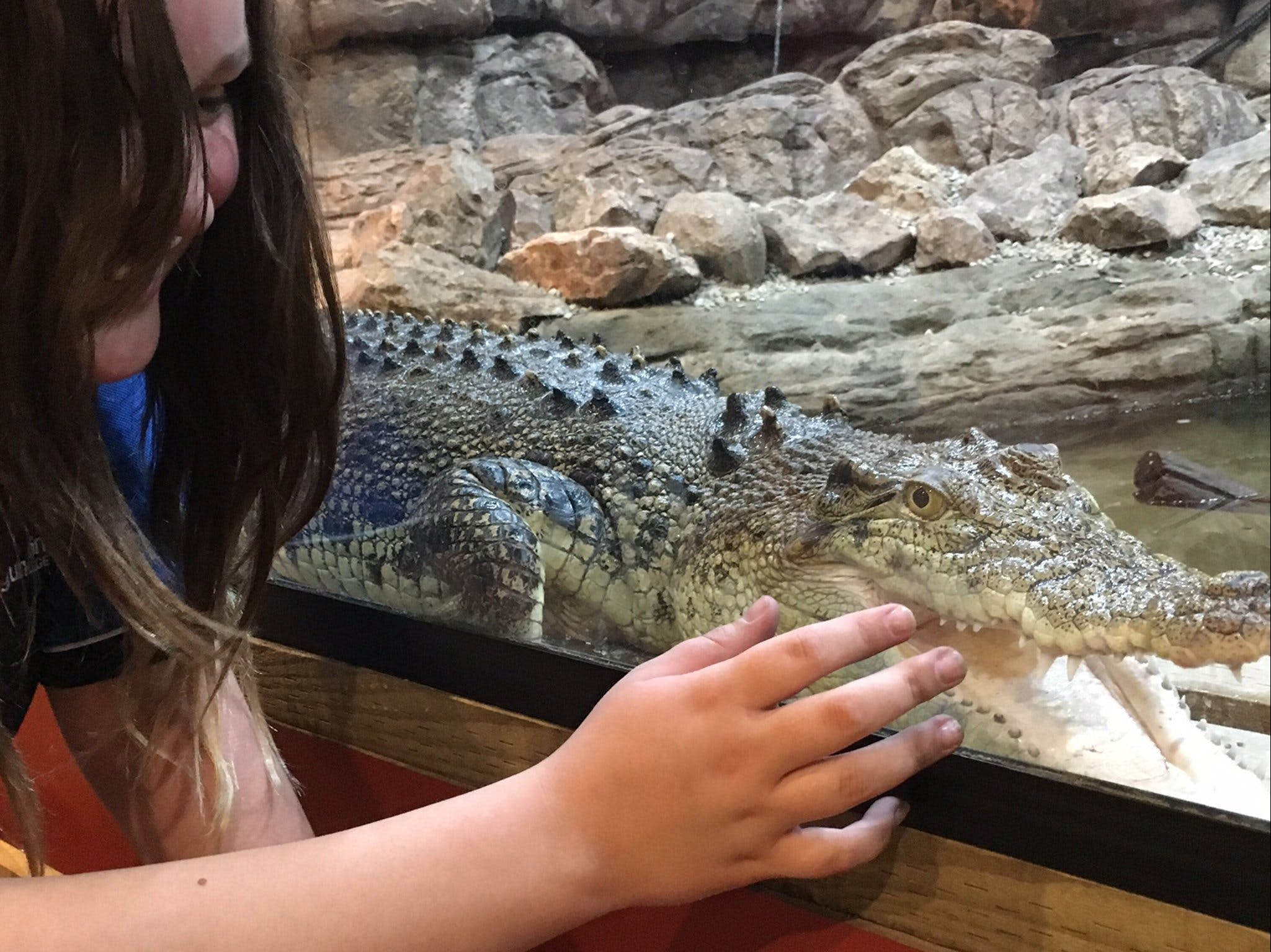 Canberra Reptile Zoo - Accommodation Find