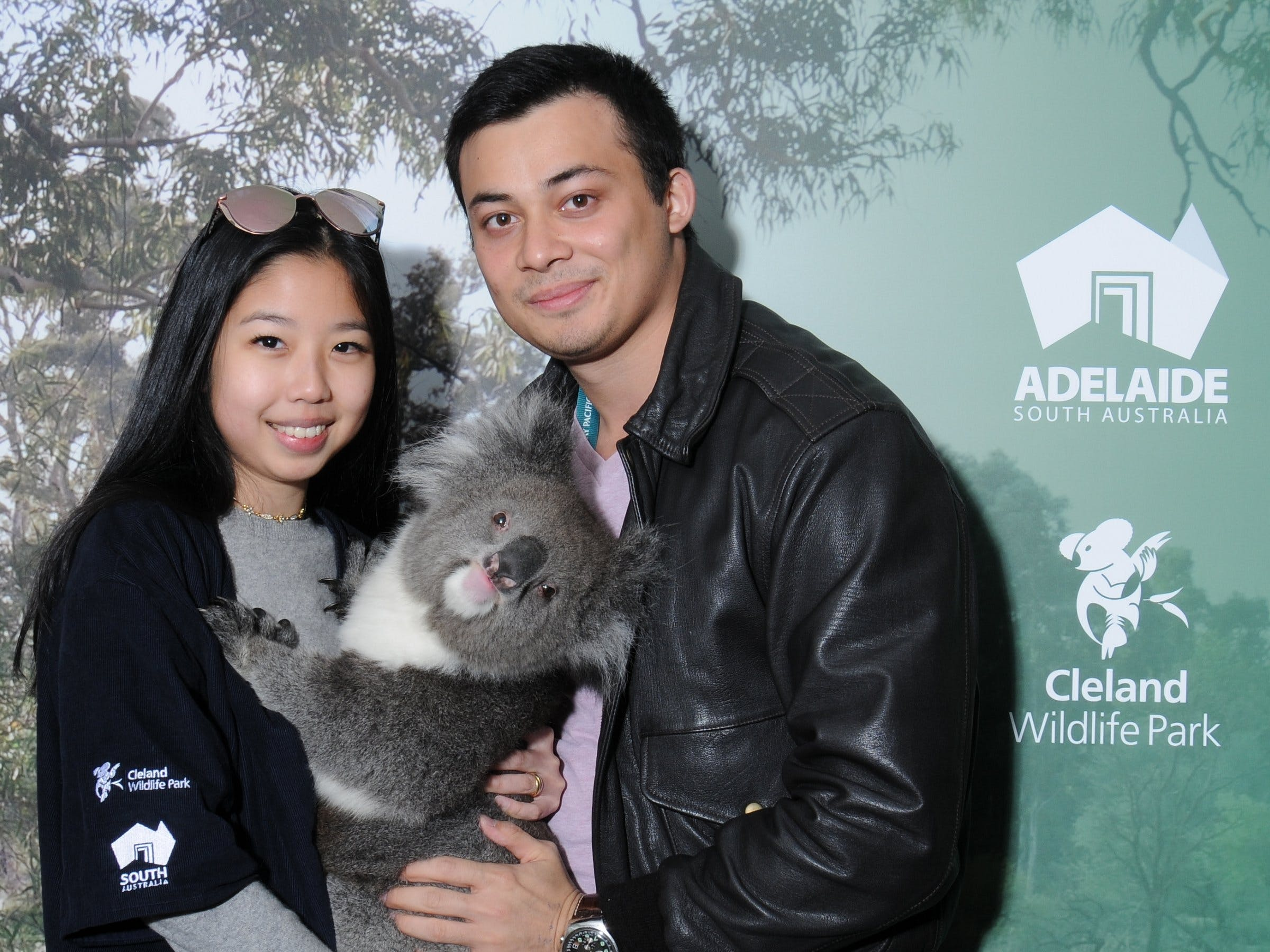 Cleland Wildlife Park - Koala Hold - Accommodation Find