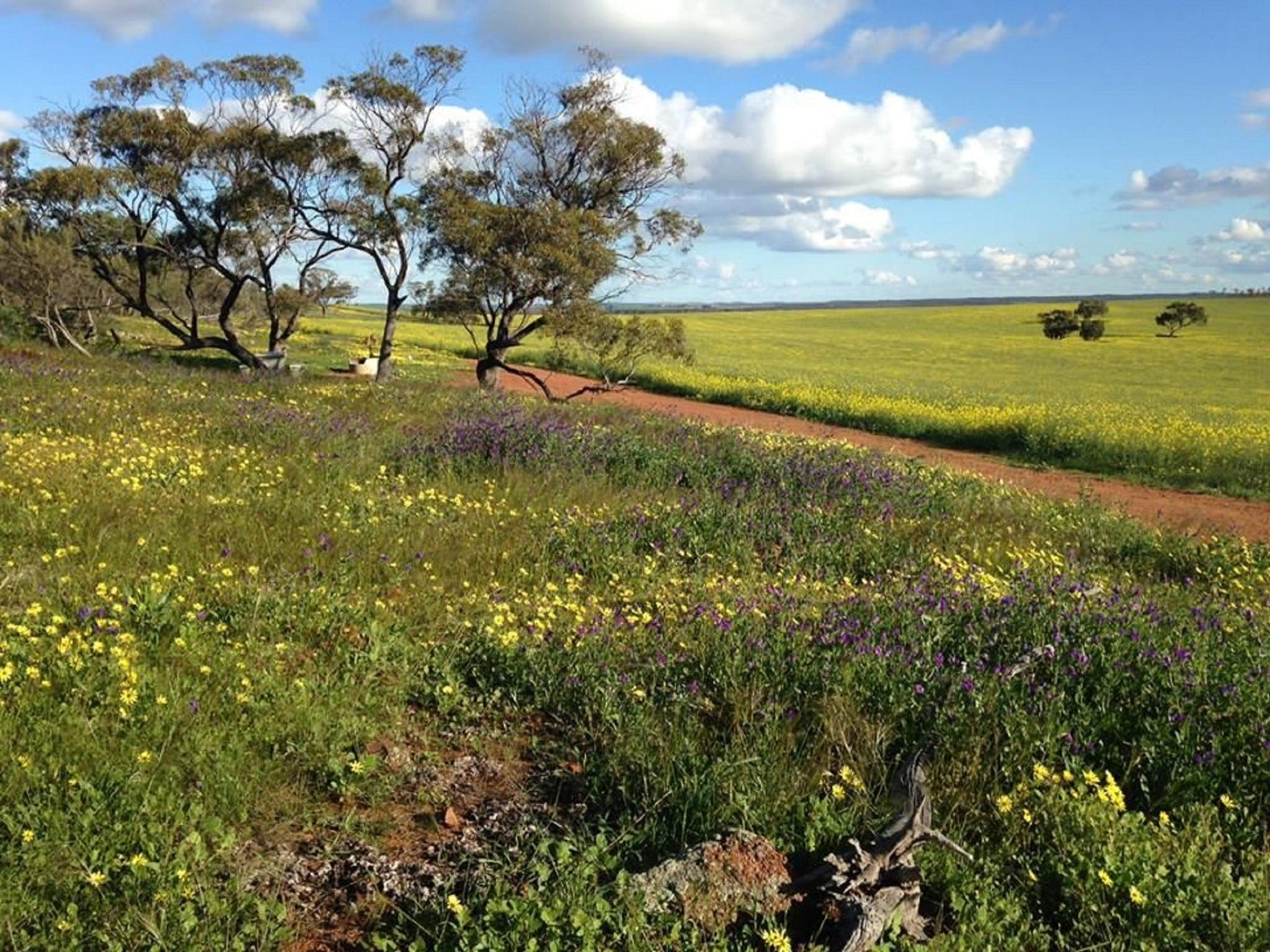 Coorow Wildflower Drive - Accommodation Find