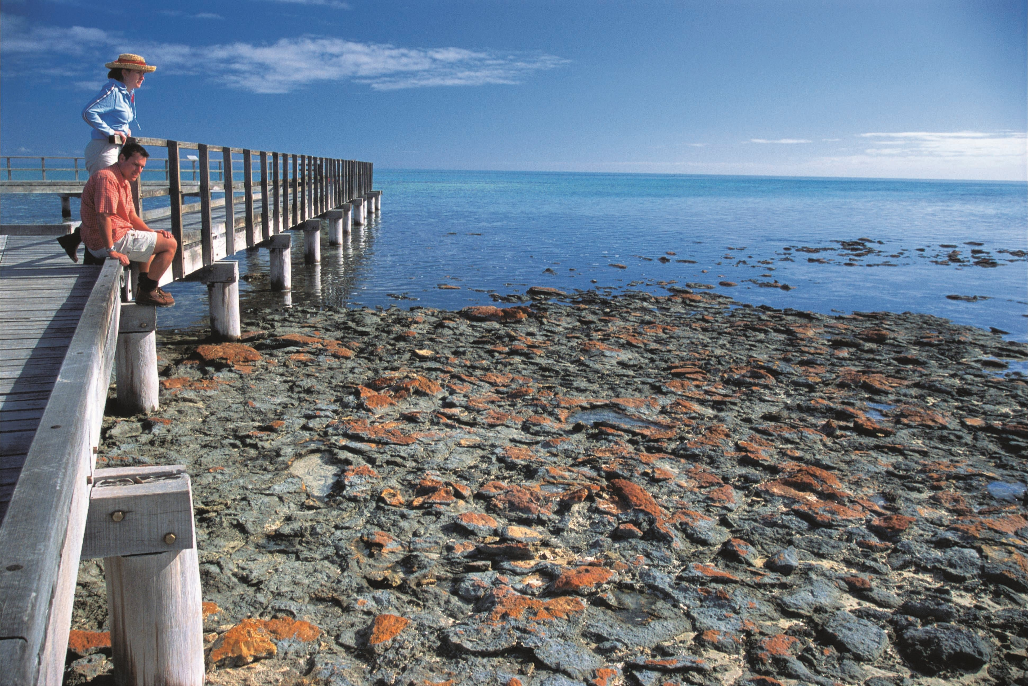 Hamelin Pool Stromatolites - Accommodation Find