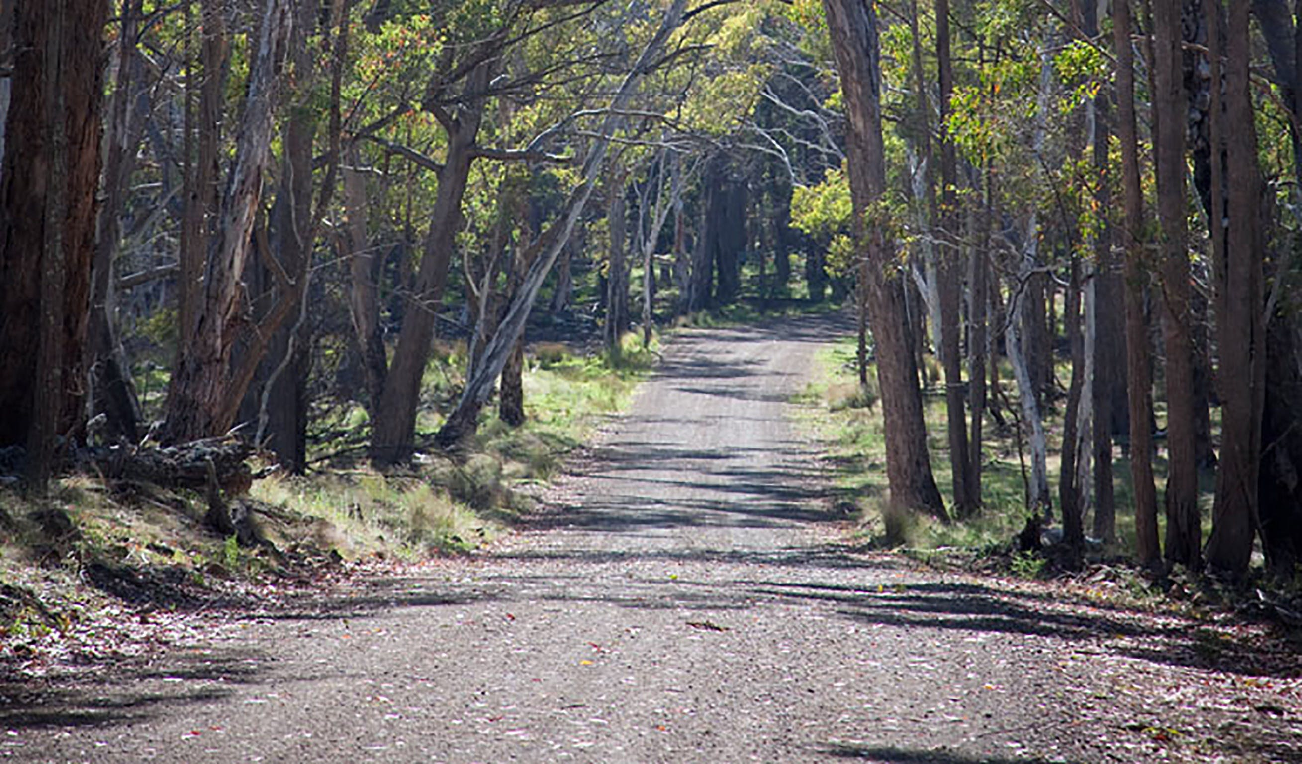 Coolah Tops National Park - Accommodation Find
