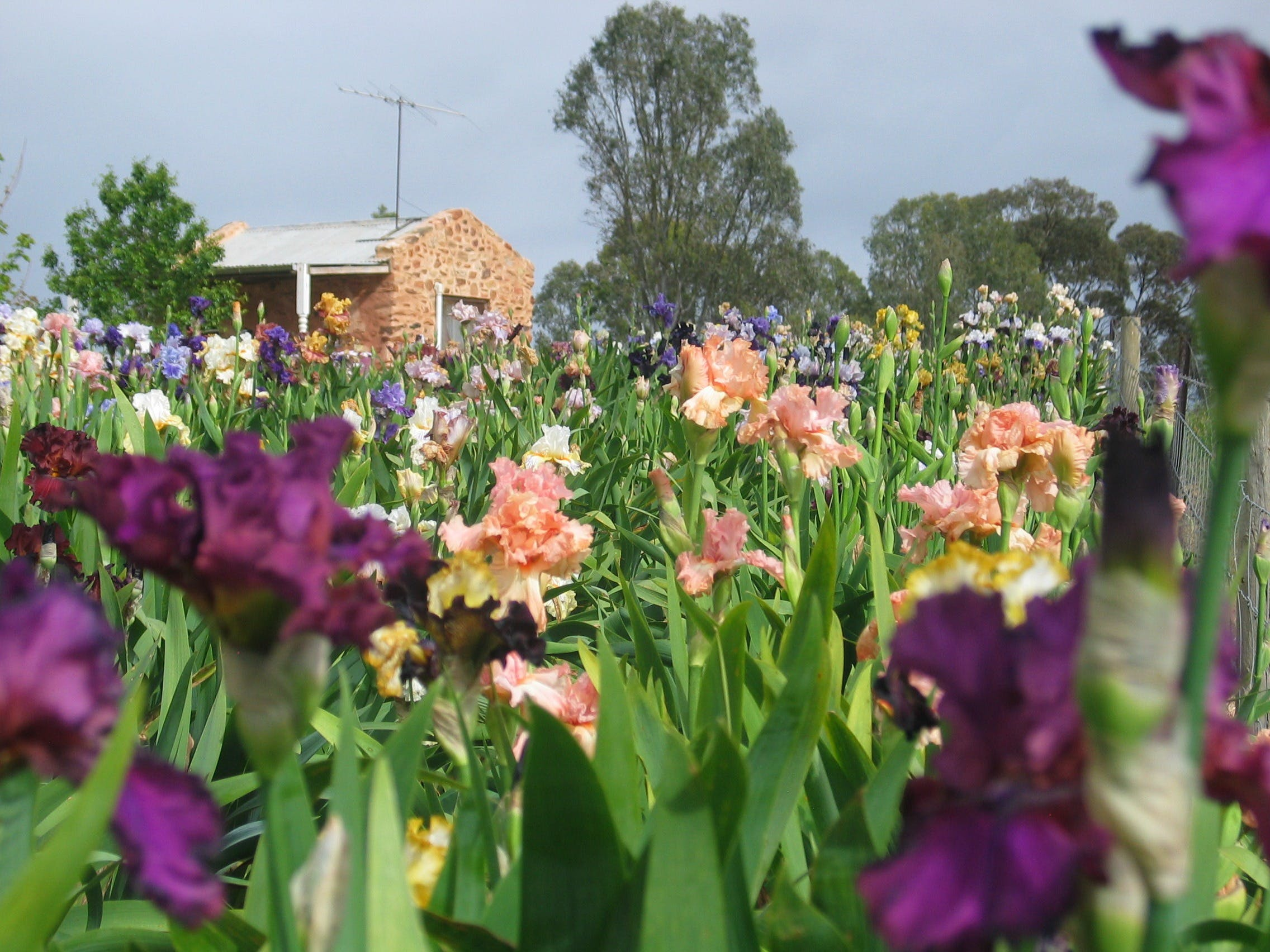 Smokin Heights Iris Display Garden - Accommodation Find
