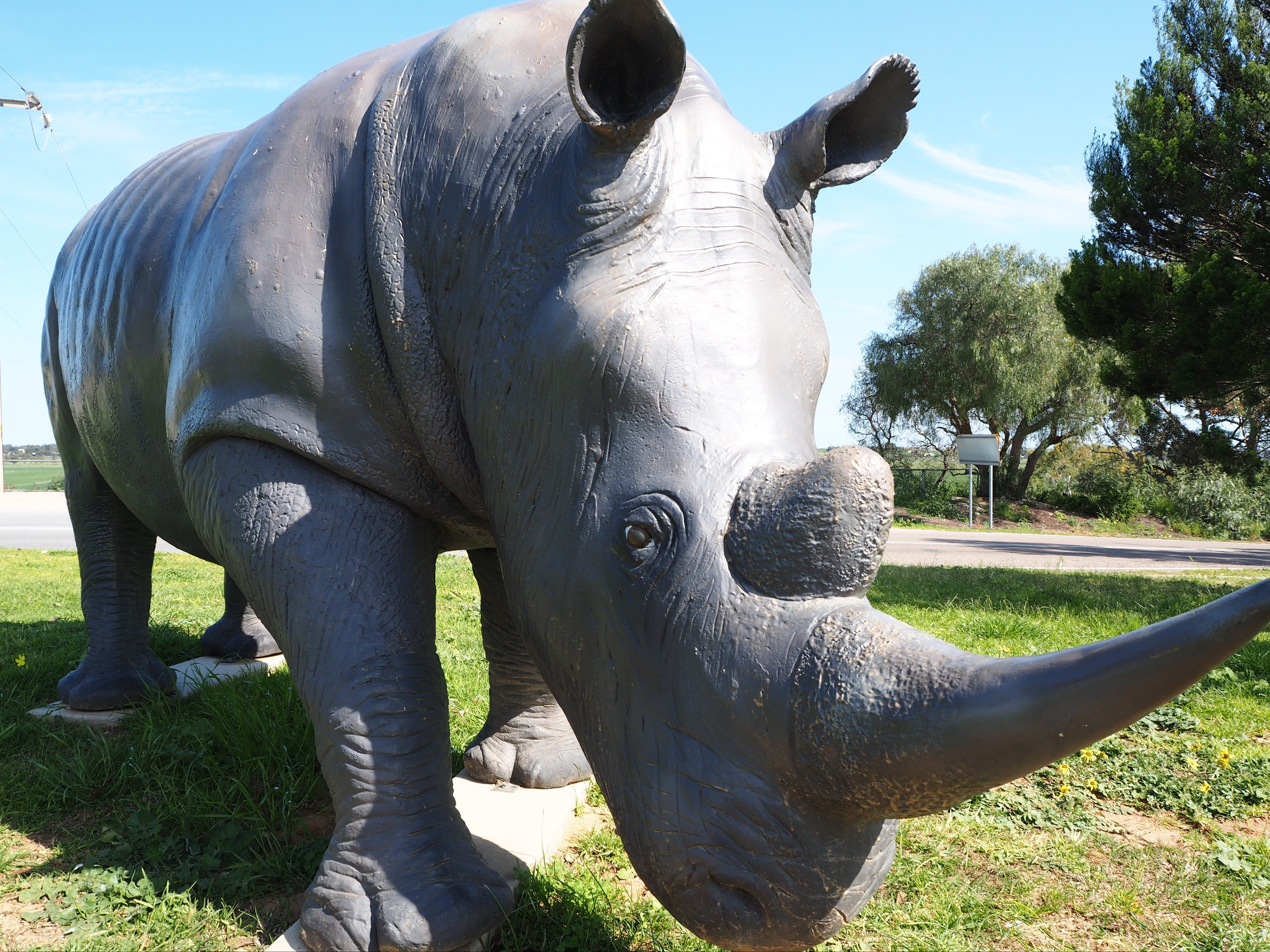 Tailem Bend Rhino Park and Dickson Reserve - Accommodation Find