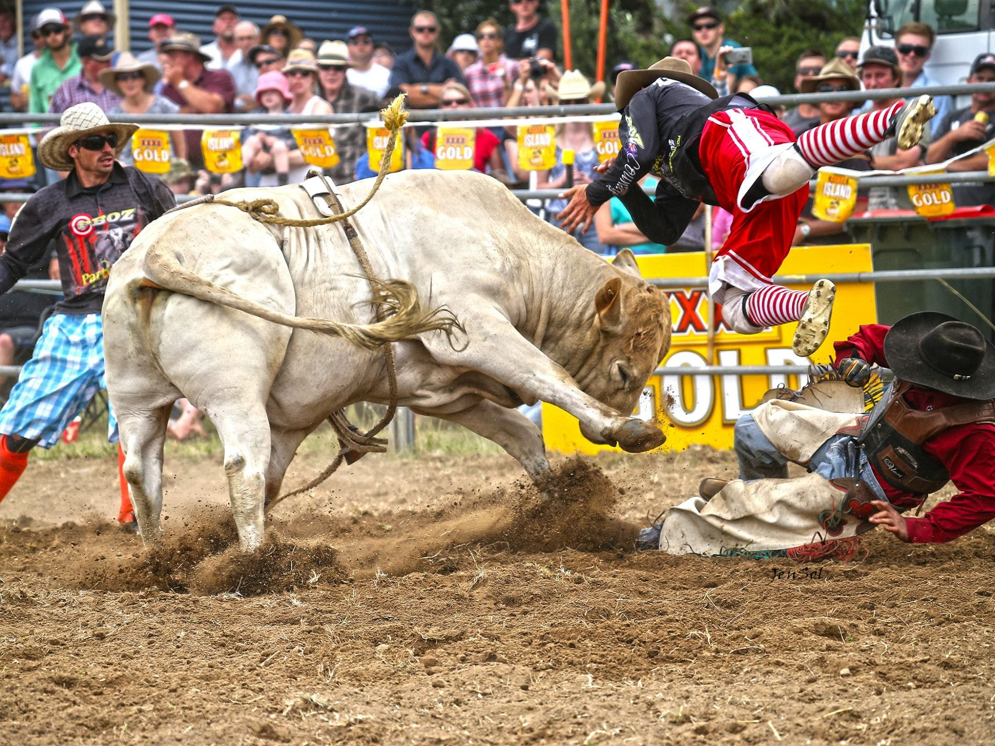 Jindabyne's Man From Snowy River Rodeo - Accommodation Find