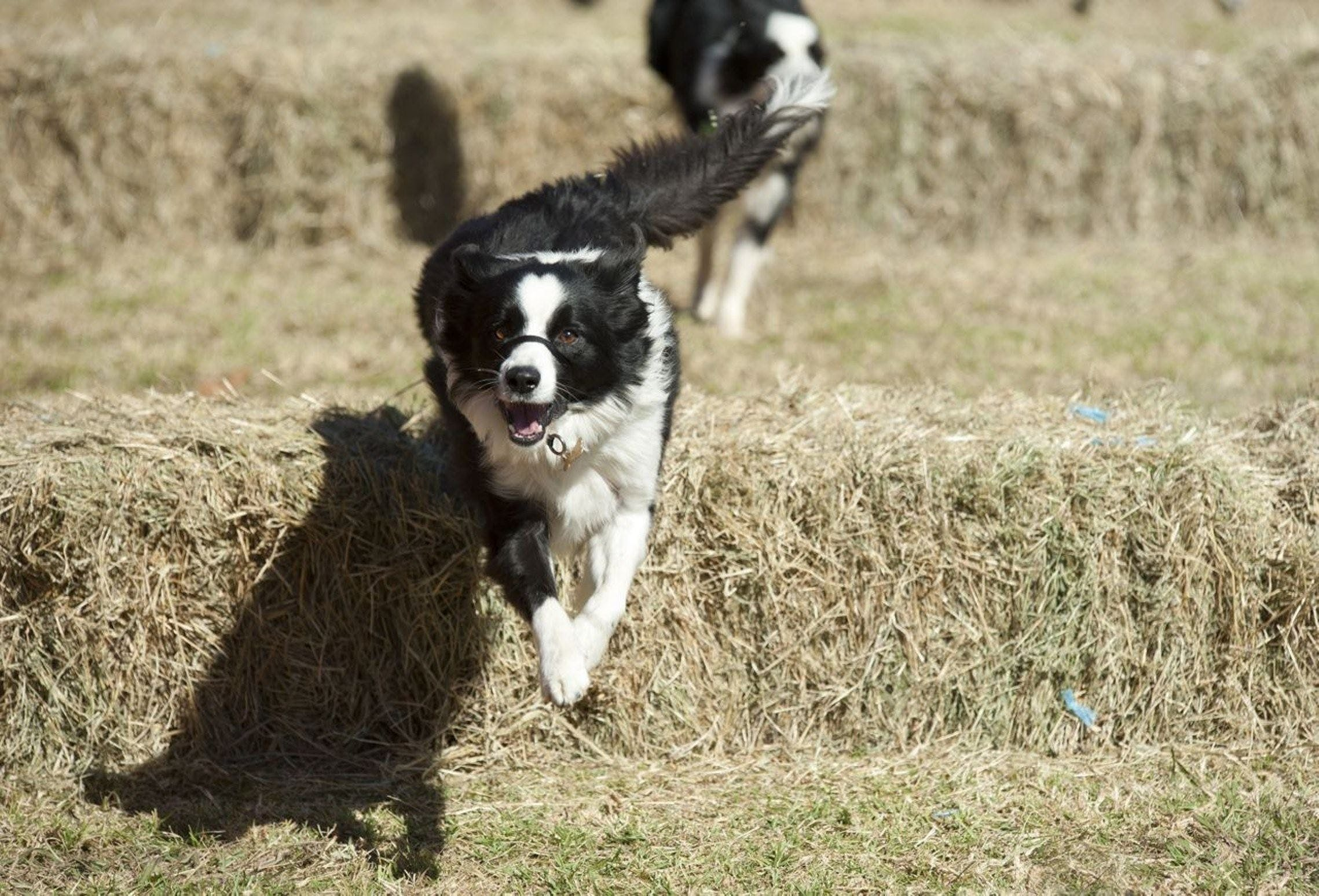 Great Nundle Dog Race - Accommodation Find