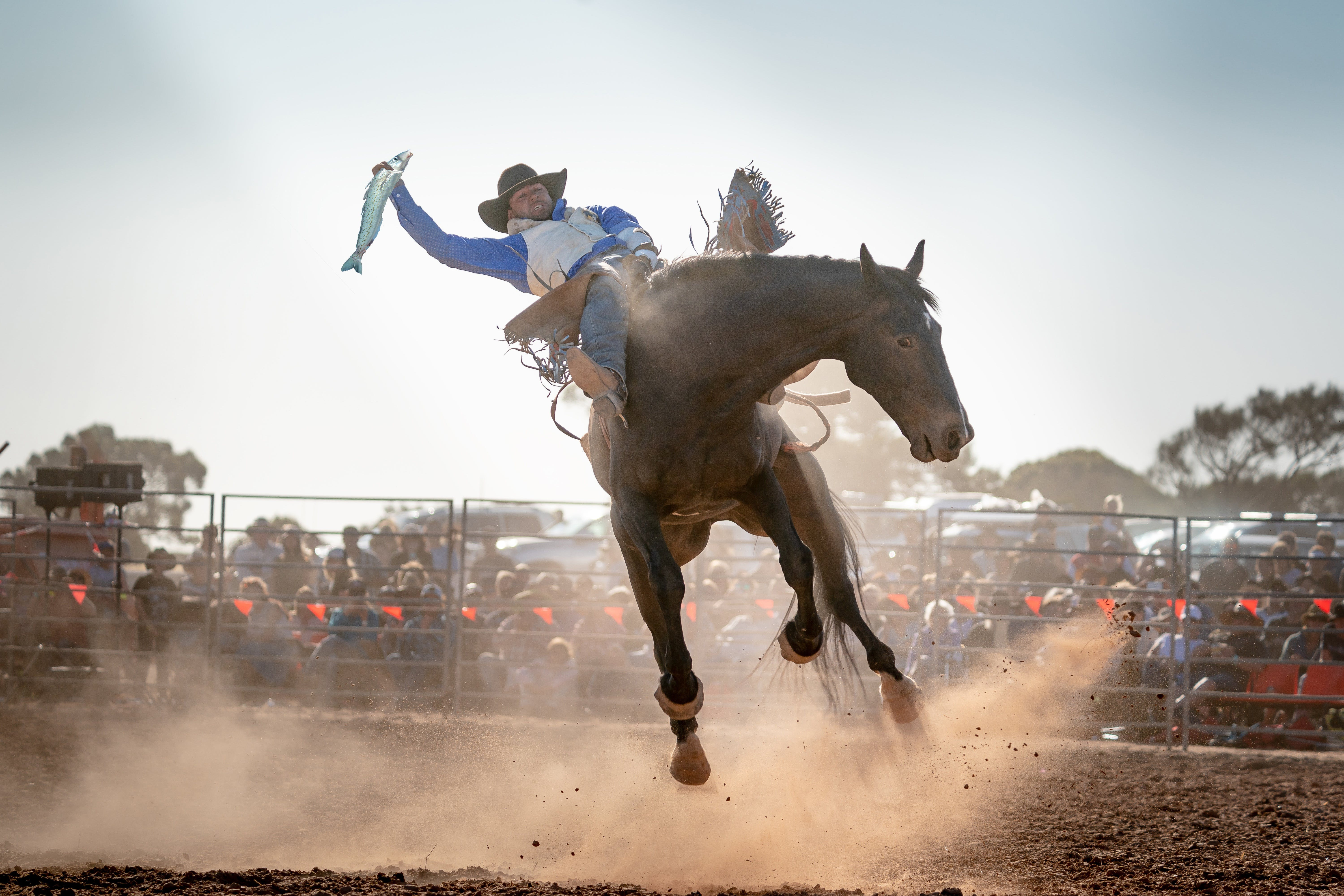 Rodeo by the Sea - Streaky Bay - Accommodation Find