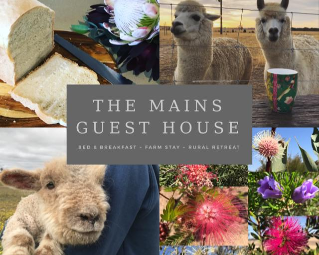 The Mains Guest House - Accommodation Find