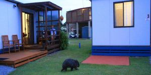 BIG4 Kelso Sands Holiday  Native Wildlife Park - Accommodation Find
